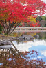 Wonderful Autumn Day (703) Tags: autumnleaves fa50mmf14 japan pentaxk3ii pond reflection showakinenpark tokyo autumn fall nature stream リフレクション 反射 四季 小川 日本 日本庭園 東京 水鏡 秋 紅葉 立川市