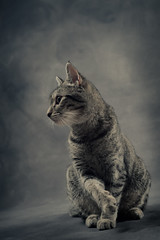 'Steel Candy' (Jonathan Casey) Tags: portrait tabby nikon d810 50mm sigma art f14 jonathan casey jonathancaseyphotography