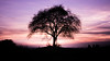 A Tree (Raphael Images) Tags: tree sunset light shadow contrast color magenta center composition dusk sun nikon d5300