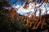 DSCF0412 (Jeff Tseng's room) Tags: voigtlander super wideheliar 1545