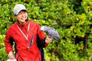 Female Grey Parrot, Teru and Bird Master Girl