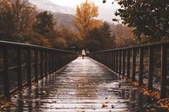 Despidiendo el otoño (A. del Campo) Tags: asturias principadodeasturias retrato portrait portraits otoño autumn paseo españa spain color colors puente puentes bridge