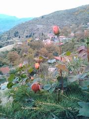 Πτέρη Αχαΐας-Ελλάδα   _IMG_20171028_112850 (amalia_mar) Tags: πτέρηαχαιασ ελλάδα χωριό τοπίο βουνά λουλούδια τριαντάφυλλα village landscape mountains flowers roses 7dwf