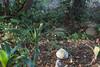 IMG_9359 (armadil) Tags: jennyatrest gecko leopardgecko