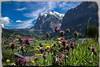 Mittlehorn - Wetterhorn - Grindelwald - Suisse (jamesreed68) Tags: mittlehorn wetterhorn grindelwald suisse schweiz oberland berne paysage nature canon 600d eos mountain alps alpes fleur ciel