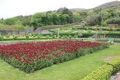 IMG_3240 (avsfan1321) Tags: kylemoreabbey ireland countygalway connemara green garden