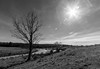 Flaring Sun Over The Pasture (John Kocijanski) Tags: blackandwhite cattle cows sun sunflare tree landscape country countryside rural canon1022mmlens sullivancounty canont2i