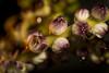 Flowers to eat (♥siebe ©) Tags: 2017 holland nederland siebebaardafotografie thai thailand thenetherlands dutch wwwsiebebaardafotografienl ประเทศไทย เมืองไทย ไทย food ดอกไม้ อาหาร