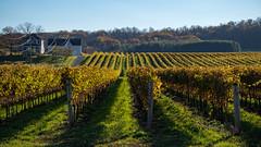 Autumns rich shadows (_Matt_T_) Tags: autumn hdpdfa28105mmf3556eddcwr peninsularidge winery bench lincoln ontario canada ca