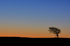 Morning conjunction - two Planets and a tree (Gwenael B) Tags: cleevehill cleevecommon conjonction conjunction venus jupiter astrophoto astro astronomy morning early horizon minimalist tree silhouette gloucestershire uk celestial encounter planets planètes
