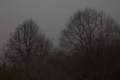 (Pentastar In The Style Of Demons) Tags: canon 5dmk2 ef24105f4 nature forest mountain landscape fog cold autumn