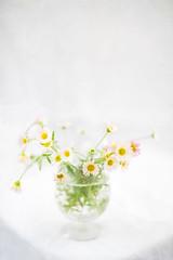 Soft Erigeron (photoart33) Tags: stilllife erigeron pale soft pretty fresh