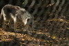 IMG_1281 (goaniwhere) Tags: wolf animal wolves wildanimal sanctuary