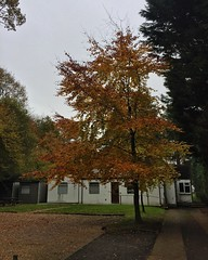 Autumn (Marc Sayce) Tags: trees colours fall leaves lodge autumn november 2017 alice holt forest hampshire farnham surrey south downs national park