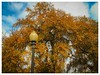 (photo.po) Tags: canong10 canongseries canon streetlamp sky leaves trees gold texas tx fall