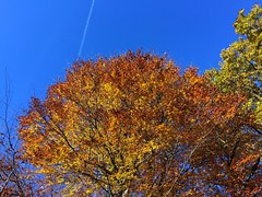 Autumn Blue Skies (Marc Sayce) Tags: colours fall gardens lodge autumn november 2017 alice holt forest hampshire farnham surrey south downs national park