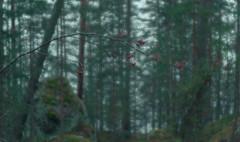 Rainy day (pasitolvanen) Tags: rain rainy moisture nature forest autumn finland suomi kouvola valkeala green red double exposure nikon nikonphotography nikkor