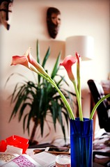 Still life: Calla Lily in blue Japanese vase (Eve Leo) Tags: flower pink saturday blue vase japanese glass livingroom morning callalily lily water green plant wall