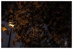 EVENING WALK (3) (der zweite blick!) Tags: andreasjurgenowski cologne derzweiteblick der2teblick deutschland germany köln kölnnippes nordrheinwestfalen northrhinewestfalia nrw abendspaziergang eveningwalk nippesertälchen abend evening dunkel dark park herbst autumn