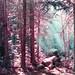 Mint Sunlight (Hayden_Williams) Tags: sunlight rays raysoflight sunlightthroughsmoke smoke fog mist morning travel trees tree forest mountain mountains colorful colorado summer surreal canonae1 camp camping outside outdoors analog analogue lomography lomo lomochromepurplexr100400