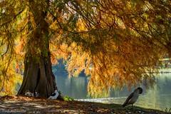 Herbst am See (Fooß) Tags: