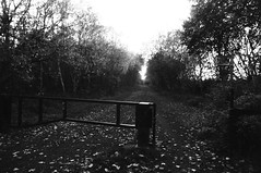 Former farm crossing off Gilroyd Lane, Dodworth     Silkstone - Wath old railway    November 2017 (dave_attrill) Tags: crossing great central railway electrified woodhead sheffield victoria manchester picadilly closed 1970 1955 stocksbridge engine transpennine upper don trail penistone wortley wadsley neepsend dunford bridge thurgoland tunnel oxspring barnsley junction huddersfield allweather cycleway bridleway footpath remains silkstone 2016 1981 dove valley no1 road tree grass sky worsbroughbranch