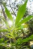 spring (hurttakoirajarakkipiski) Tags: ganja weed hemp herb thc cannabis marihuana marijuana medicalmarihuana medicine health hurttakoirajarakkipiski medicalcannabis 420 shanti peace love sunshine sun spring flare birch
