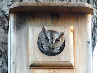 Owl Bedtime