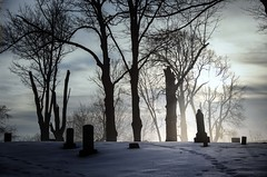 Coming or Going 2 (Leslie Victor) Tags: mg0706 tomestones silhouettes trees snow moody scary landscape cemetery
