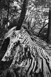 Old wood, fallen tree.