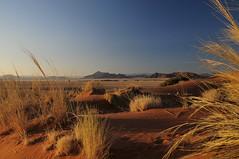 Sunrise from Elim dune (BayaBxl) Tags: namibie namibia sosusvlei dunes sable sand elim sunrise leverdesoleil