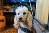 dog color (Jorge Guarachi) Tags: dog chile kokeshi