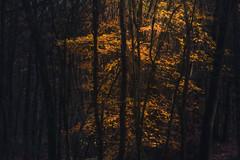 DSC_2032-PSD.jpg (ruud.snijders) Tags: forrest erks woods reigersbroek woodlands rozendaal bos fall herfst