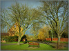 Village scene, Willoughby (Jason 87030) Tags: willoughby village warks warwickshire light sunny walk pleasant family bench seat salt bunker heavey road green trieange lowerst street duck pond trees naked nume branch trunk willow 2017 november sony ilce alpha a6000 nex holly willoughbooby fun scene uk england unitedkingdom greatbritain framed border composition effort hobby nice bird heron local nearby outside outdoors