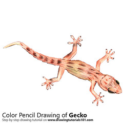 Gecko with Color Pencils [Time Lapse] (drawingtutorials101.com) Tags: geckos lizards small phelsuma gekkonidae sketch sketches sketching draw drawing drawings color colors coloring how timelapse video pencil time lapse timelaspe speed