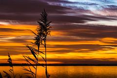 Colored sunrise siluet at Donau (lengel_photography) Tags: water sun donau nature landscape siluet colors colored sunset