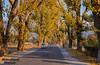 Autumn in Shinkiari, Mansehra (Shehzaad Maroof Khan) Tags: shinkiari mansehra kkh karakoram highway autumninpakistan trees ontheroad khyberpakhtunkhwa beautifulpakistan travelpakistan