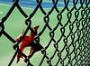 Longing For Summer (nrg_crisis) Tags: fence leaf autumn tenniscourt hff