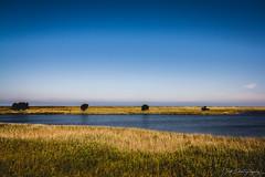 Golden Summer Days (janmalteb) Tags: deutschland germany prerow fischland dars ostsee baltic sea meer himmel sky blue blau landschaft landscape baum trees bäume wasser water feld field canon eos 1000d