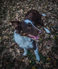 _DSC7665 (Ryan Ivy) Tags: border collie cutter creek ranch wills point texas