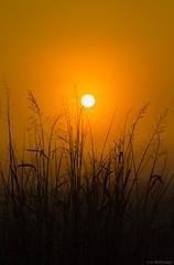 Amanece en el campo. (R. Royo) Tags: sun nature naturaleza naranja sol paisaje amanecer frio december diciembre winter invierno españa alfocea zaragoza aragon 700d eos canon