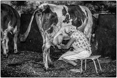 La traite à la main ! (bertranddorel) Tags: slovénie vache cow ferme lait milk bw bn bnw blancetnoir blackandwhite farm femme voman human people slovenia europe skofjaloka mono monochrome voyage