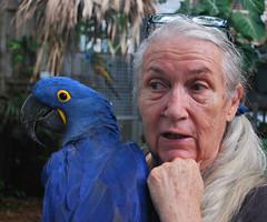 Key West (Florida) Trip 2016 0569Ri 5x6 (edgarandron - Busy!) Tags: florida keys floridakeys keywest birds nancyforrester nancyforresterssecretgarden secretgarden