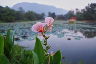 Flowers in the morning by the lake of River Kwai Park & Resort in Kanchanaburi, Thailand