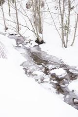A Babbling Brook (Kim Tashjian) Tags: winter ice creek snow mountains montana