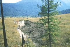 Anglų lietuvių žodynas. Žodis sedimentation reiškia n geol., chem. nusėdimas; nuosėdų kaupimasis, sedimentacija lietuviškai.