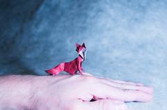 Origami Fox (Masamune81) Tags: origami fox zorro hoang tien quyet arte papel papiroflexia