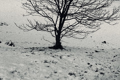 winterland (Rino Alessandrini) Tags: road snow winter nature street outdoors coldtemperature asphalt nopeople transportation ice tiretrack ruralscene frozen landscape weather blackandwhite frost backgrounds season tree branch baretree deadplant white dry scenics barren loneliness