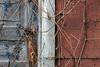 Wild Grapes on Grey Door (Conrad Kuiper) Tags: blue 18135mm grey 7dmkii rust canon red wawanosh door