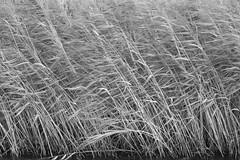 "Nature in Motion <a style=""margin-left:10px; font-size:0.8em;"" href=""http://www.flickr.com/photos/96753824@N02/24415809258/"" target=""_blank"">@flickr</a>"